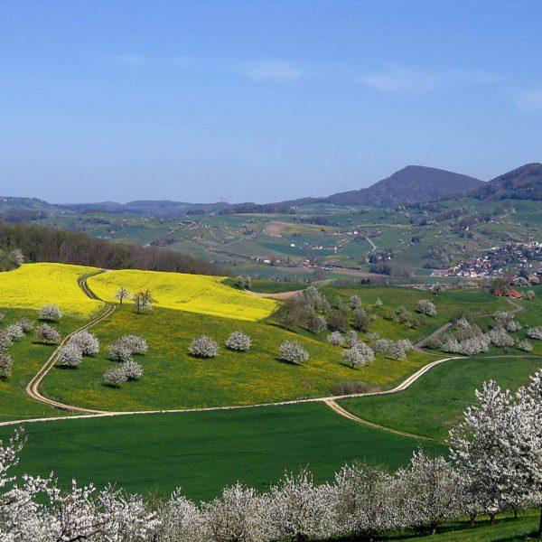 Frühling_Landschaft in Frick