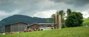 Haeseli Hof mit Rindern auf der Weide