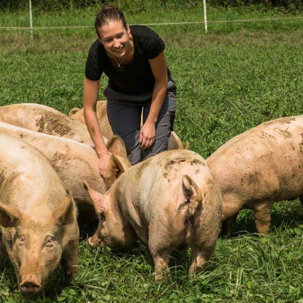 Schweine im Gras mit Judith